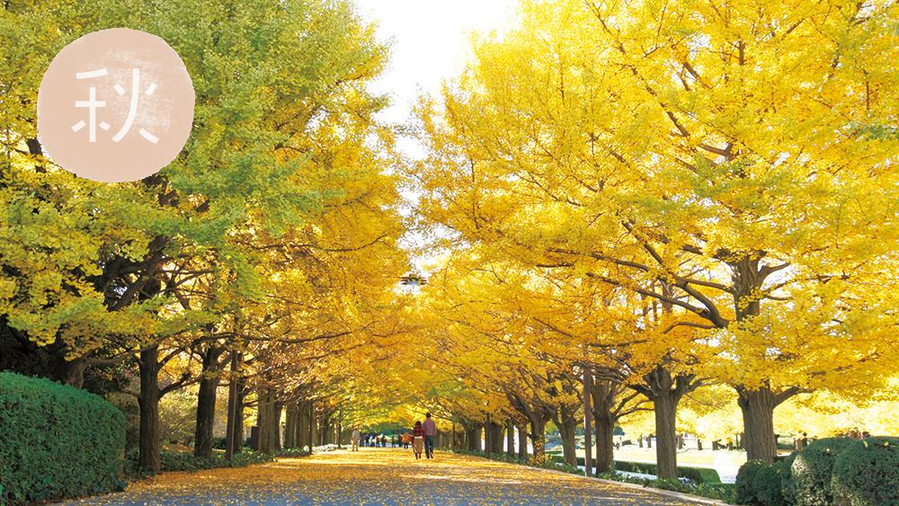 秋天的照片